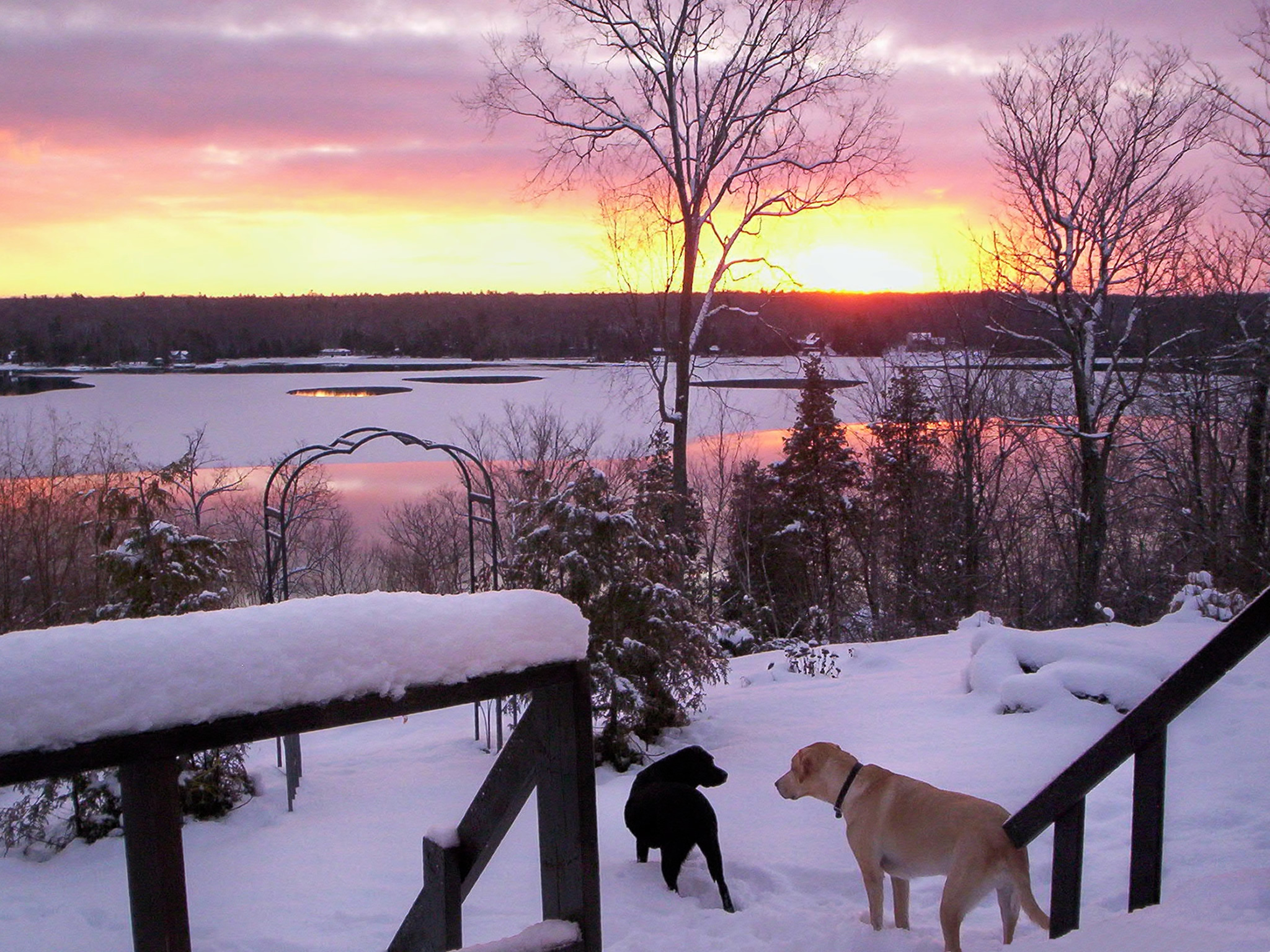 two-dogs-playing-in-the-snow-during-sunset.jpg
