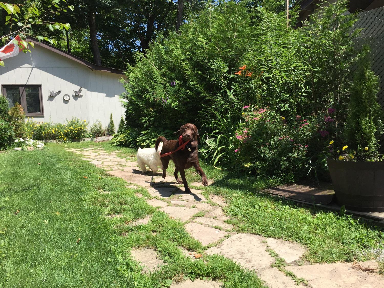 dog-walking-dog.jpg