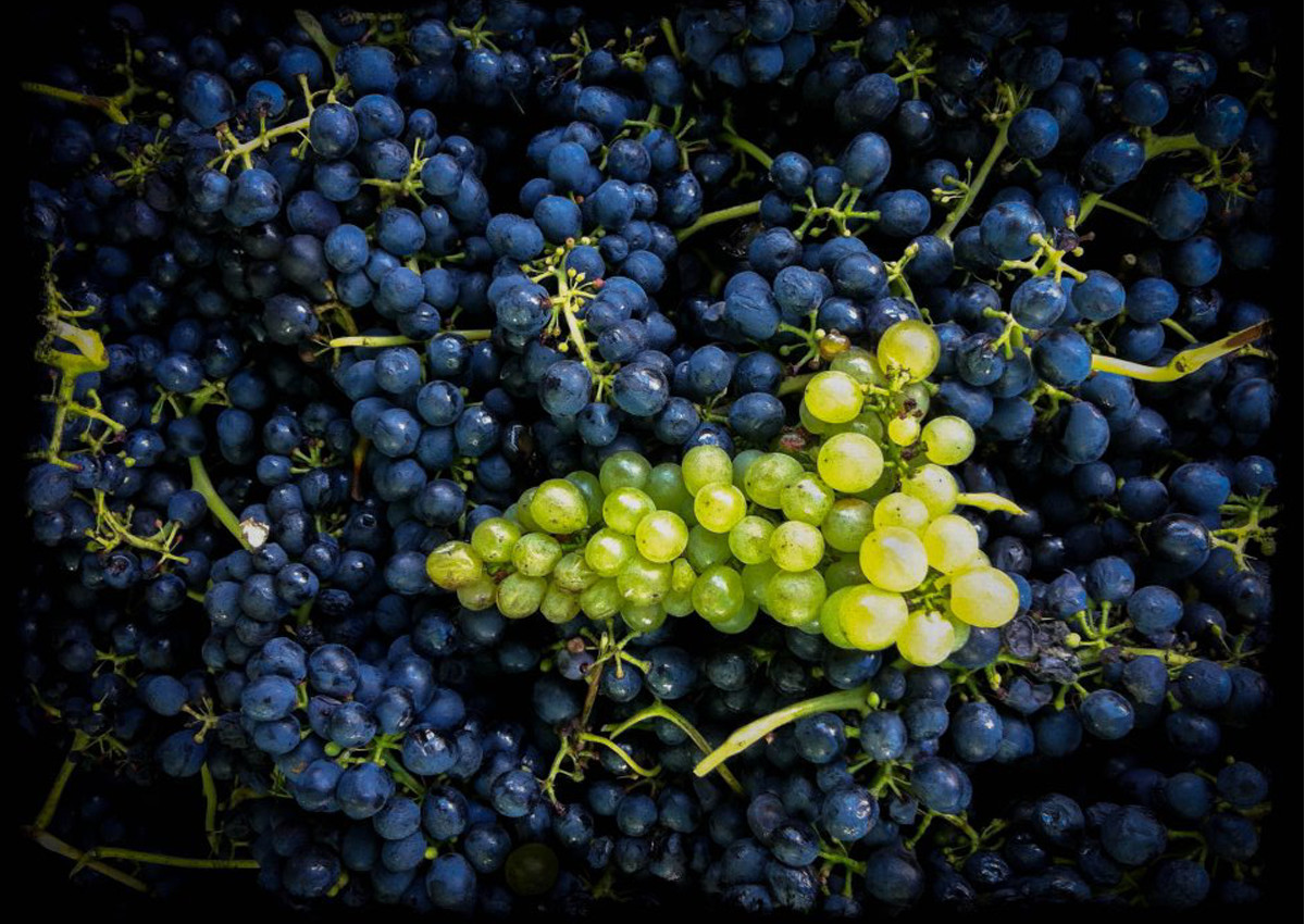 Ravensworth_Grapes2.jpg