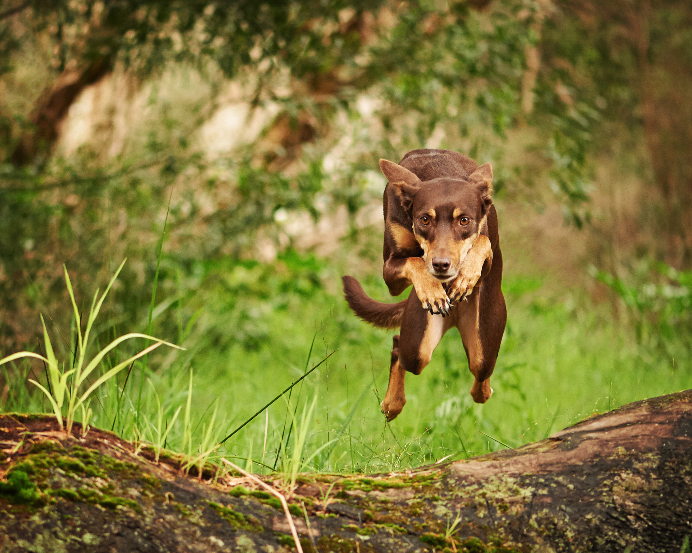 dog_jumping_four_paws