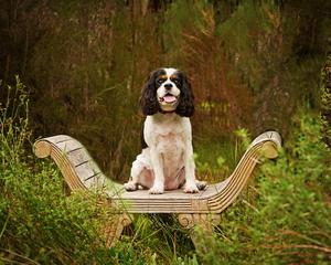 dog_outdoor_pet_four_paws_portrait
