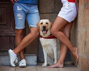dogs_pet_four_paws_portrait