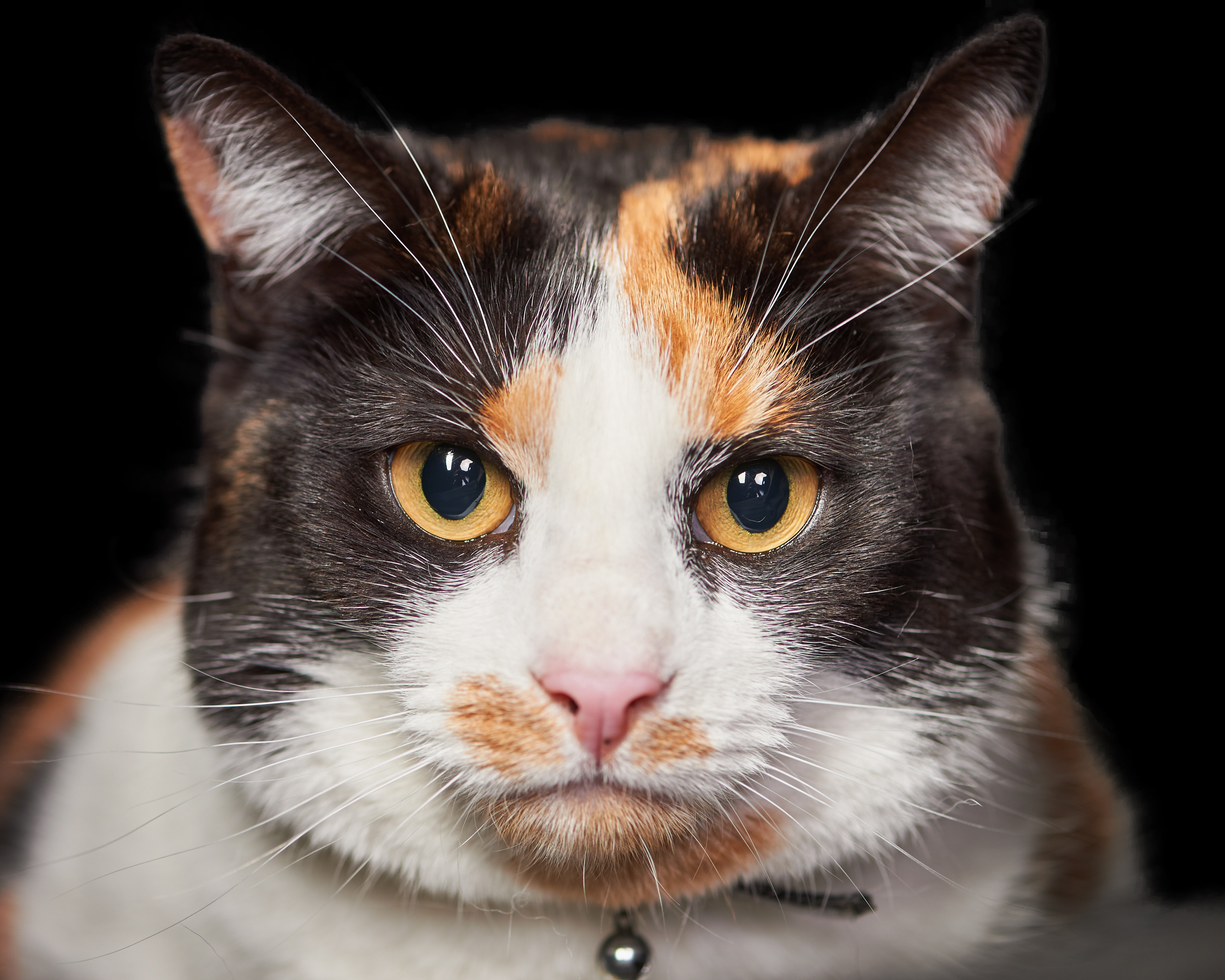 stare_cat_four_paws_portrait_pet_photography
