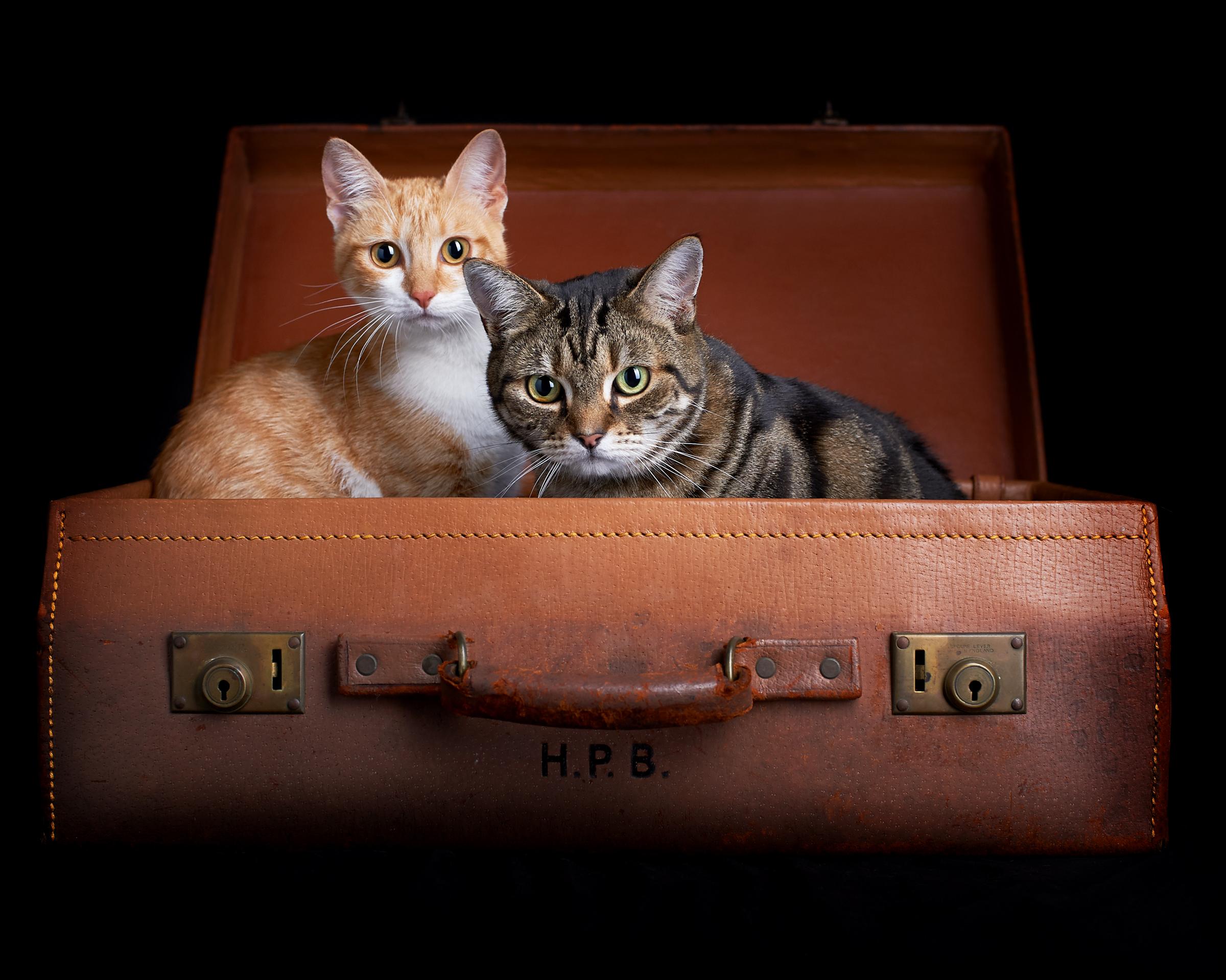 suitcase_cat_four_paws_portrait_pet_photography