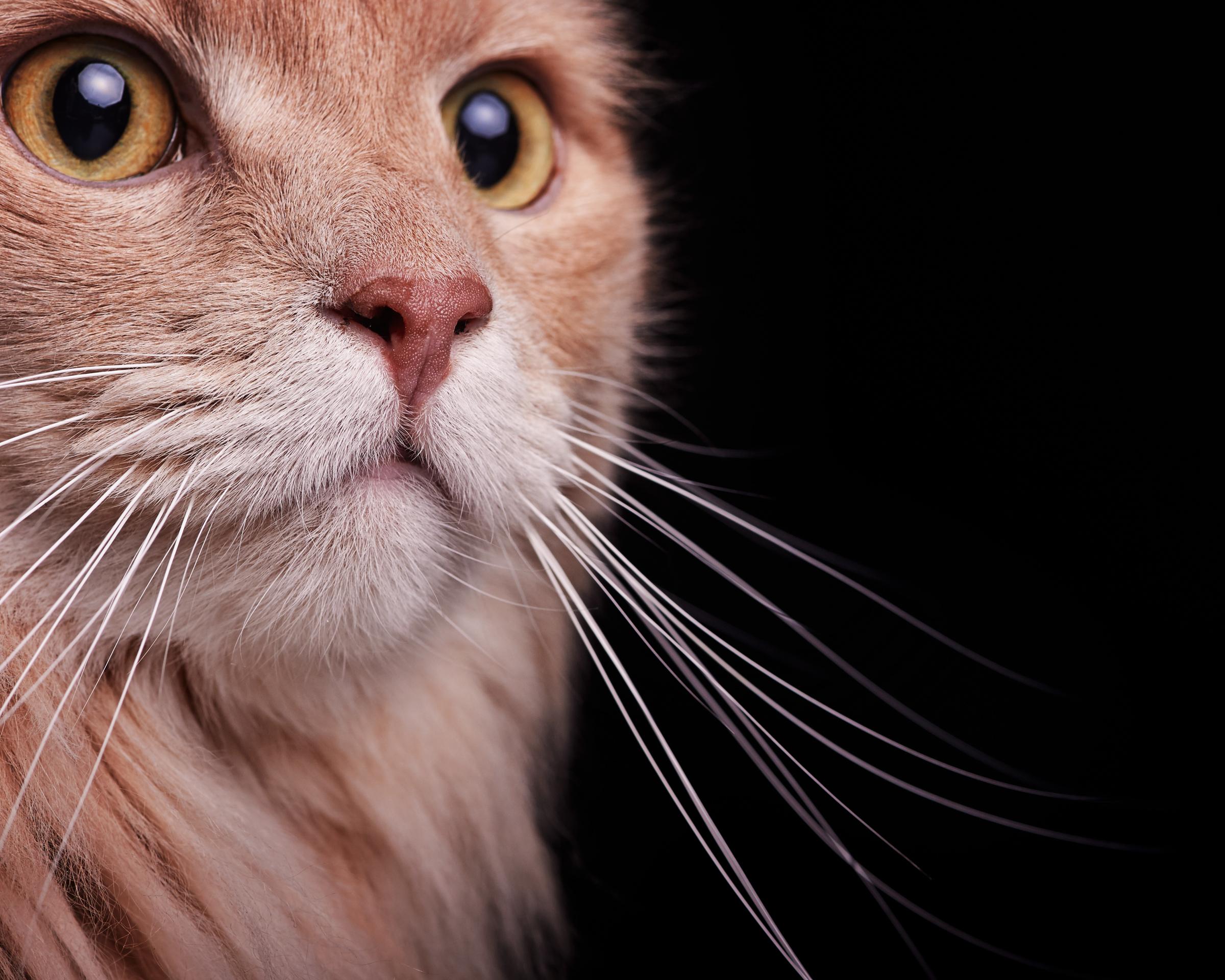 whiskers_cat_four_paws_portrait_pet_photography
