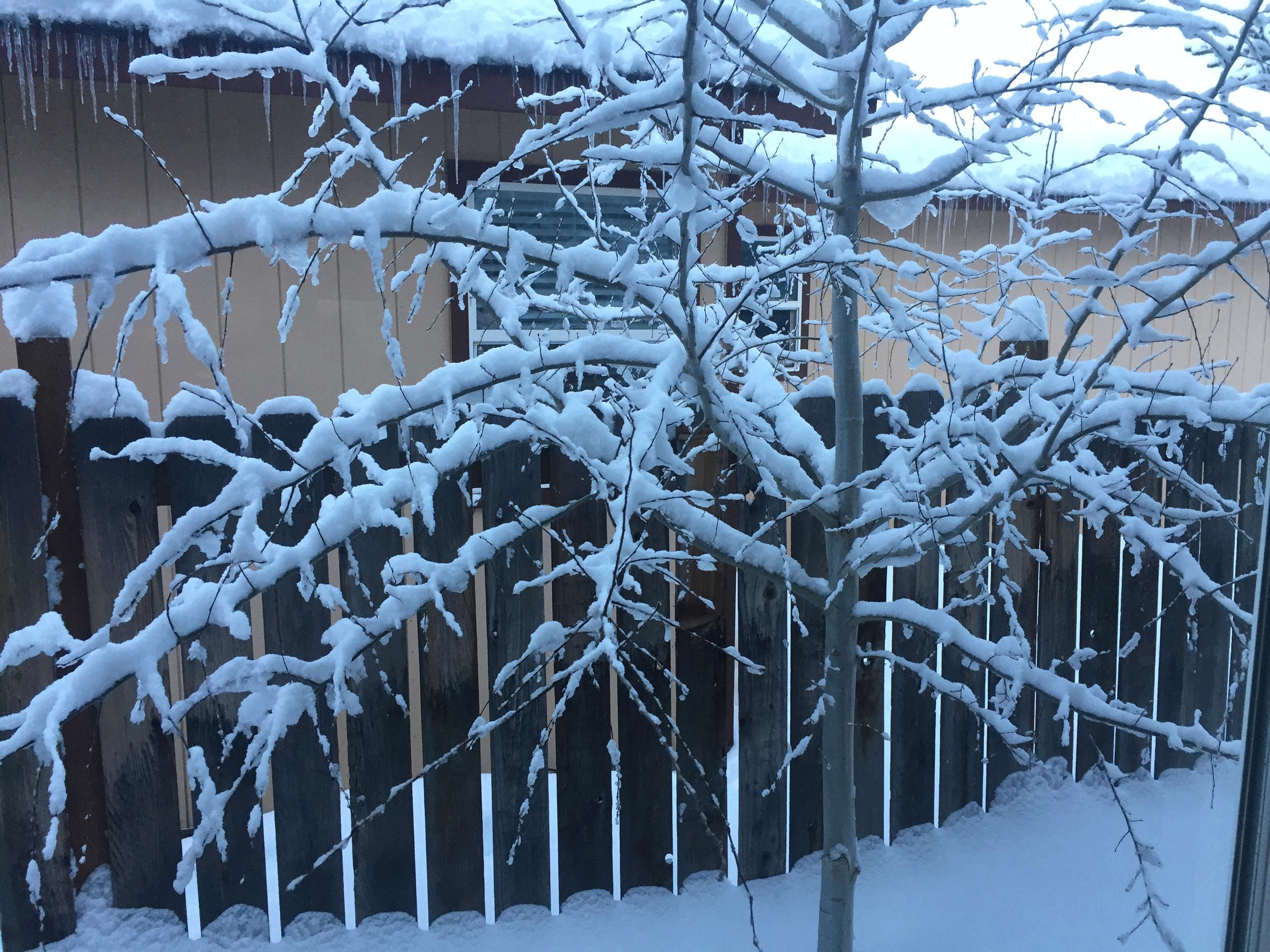 snowy_aspen
