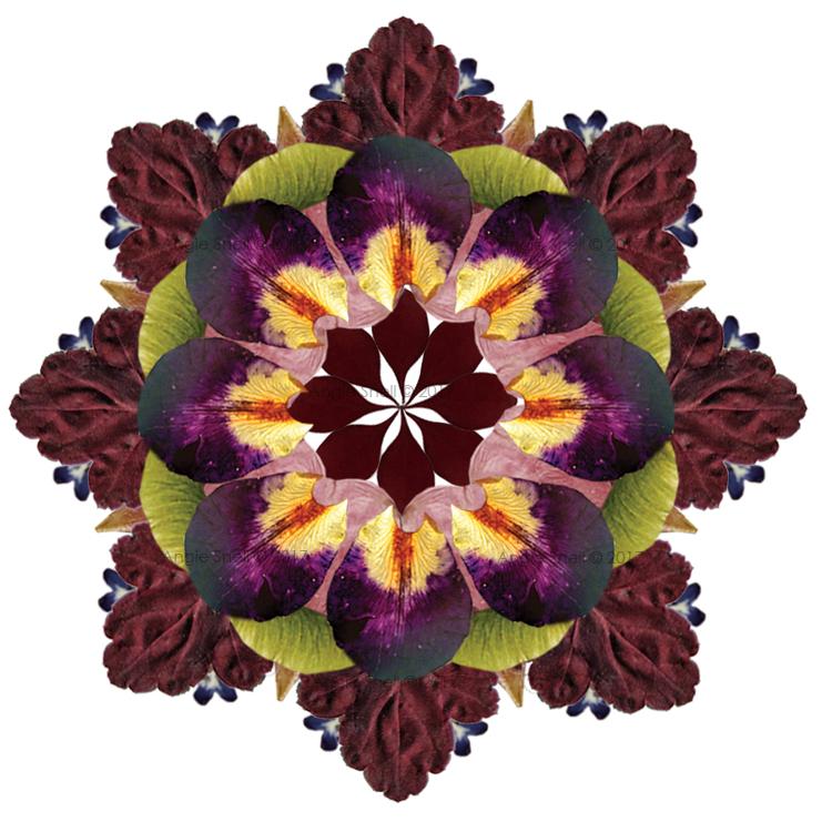Pressed Leaves & Flower Mandala in Photoshop