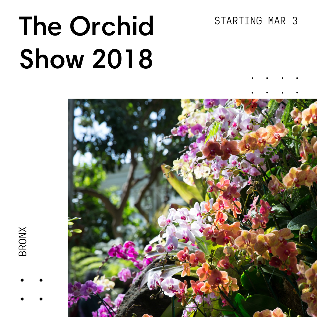 Orchids-2018.03.01-01.11.18.png