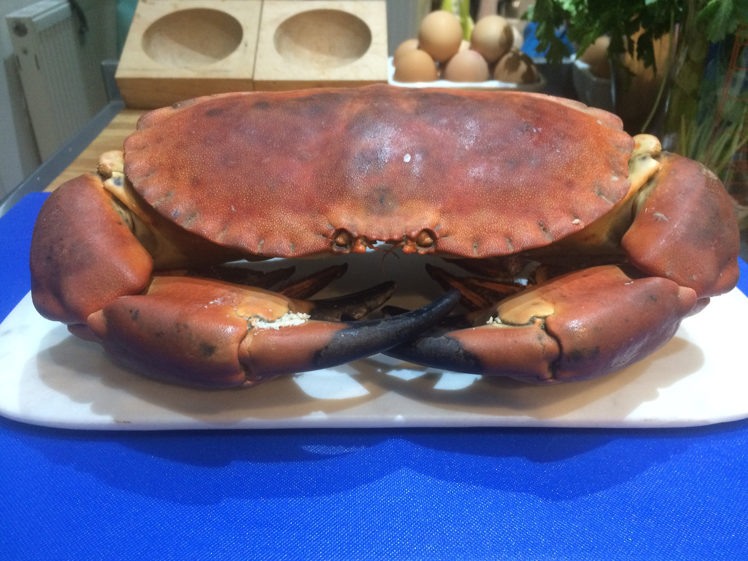 Large British Crab: ask the fishmonger to prepare the crab, which means to remove the unpleasant inedible parts.