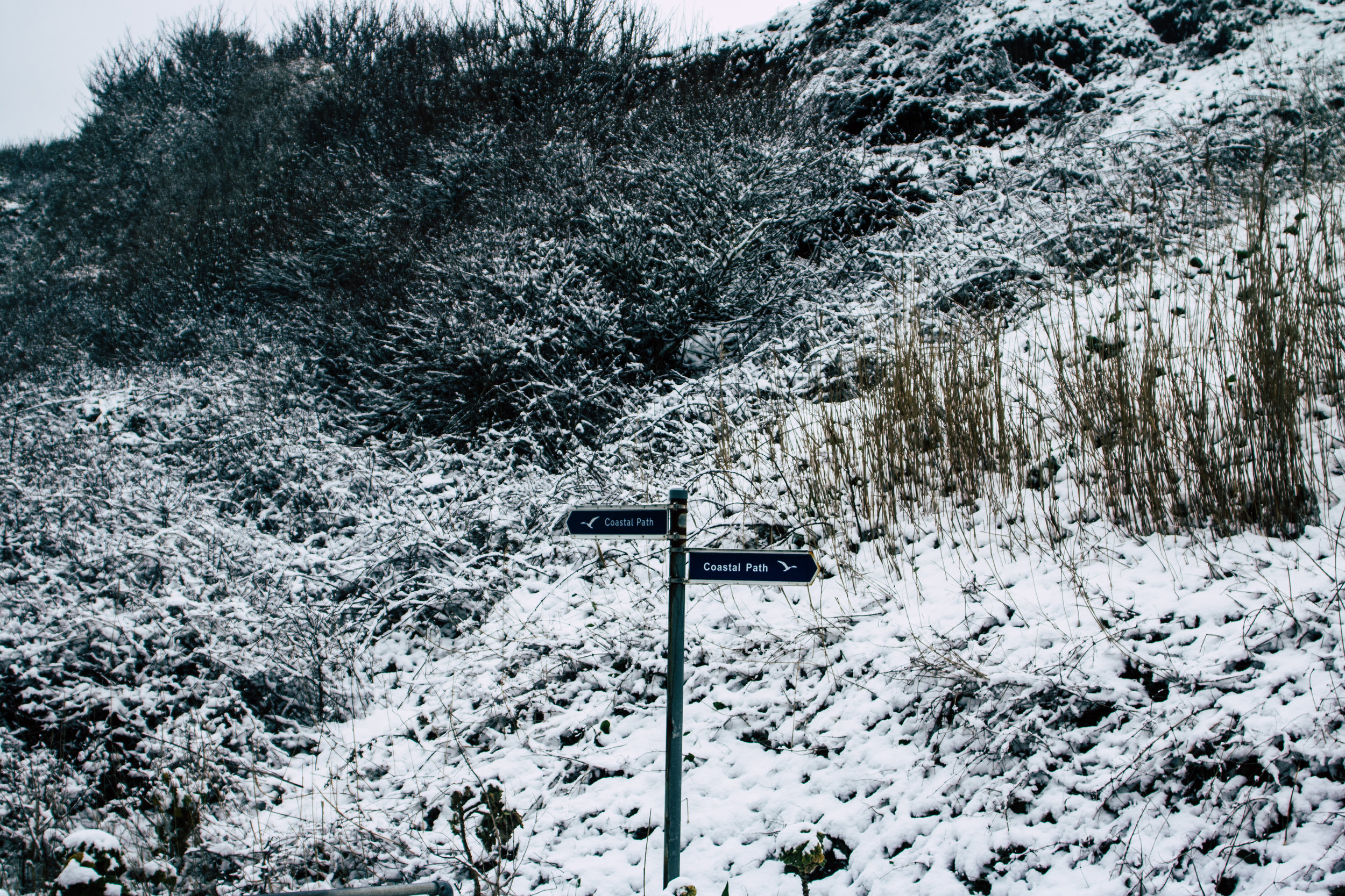 IOW snow (30 of 36).jpg