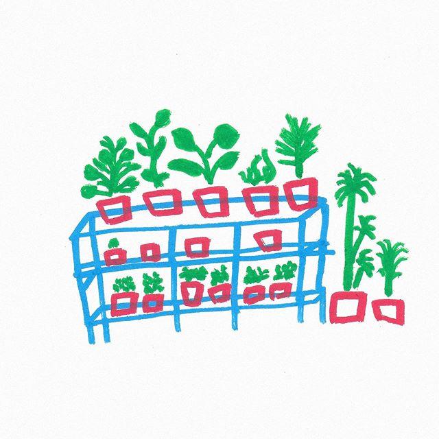 Botanical #illustrator #illustration #minimalism