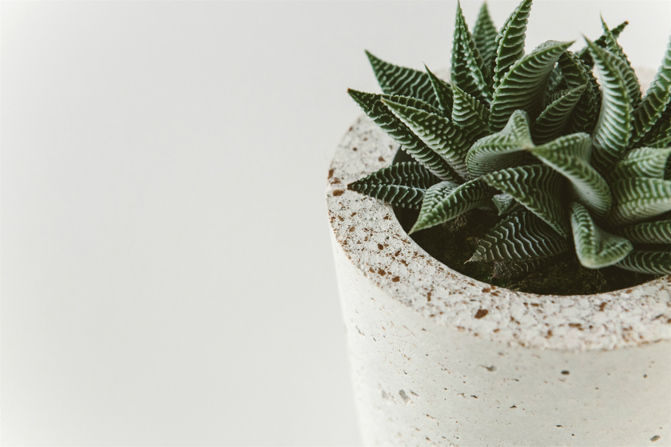 Roco Concrete pot