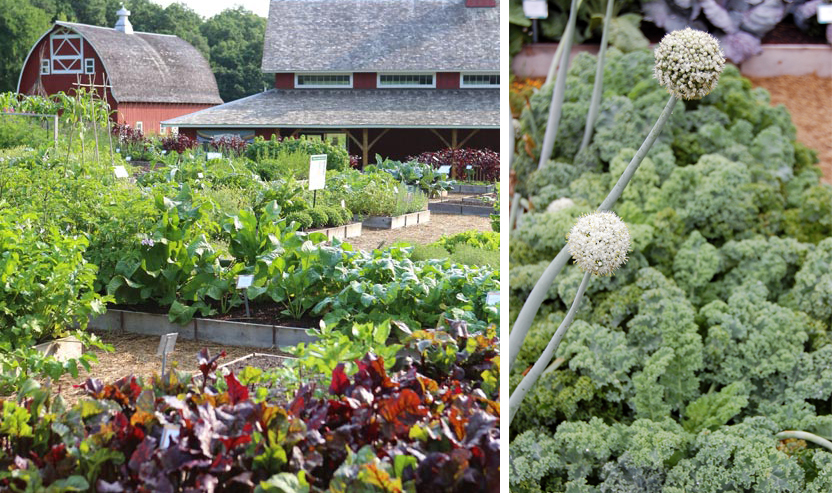 LEFT: The prolific gardens of the Seed Savers Exchange in Decorah, Iowa. RIGHT:  Kale seeds grown in the garden to be later circulated.