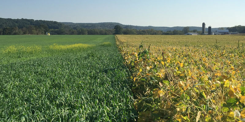 General Mills aims to support the use of regenerative agriculture practices on one million acres of farmland by 2030.