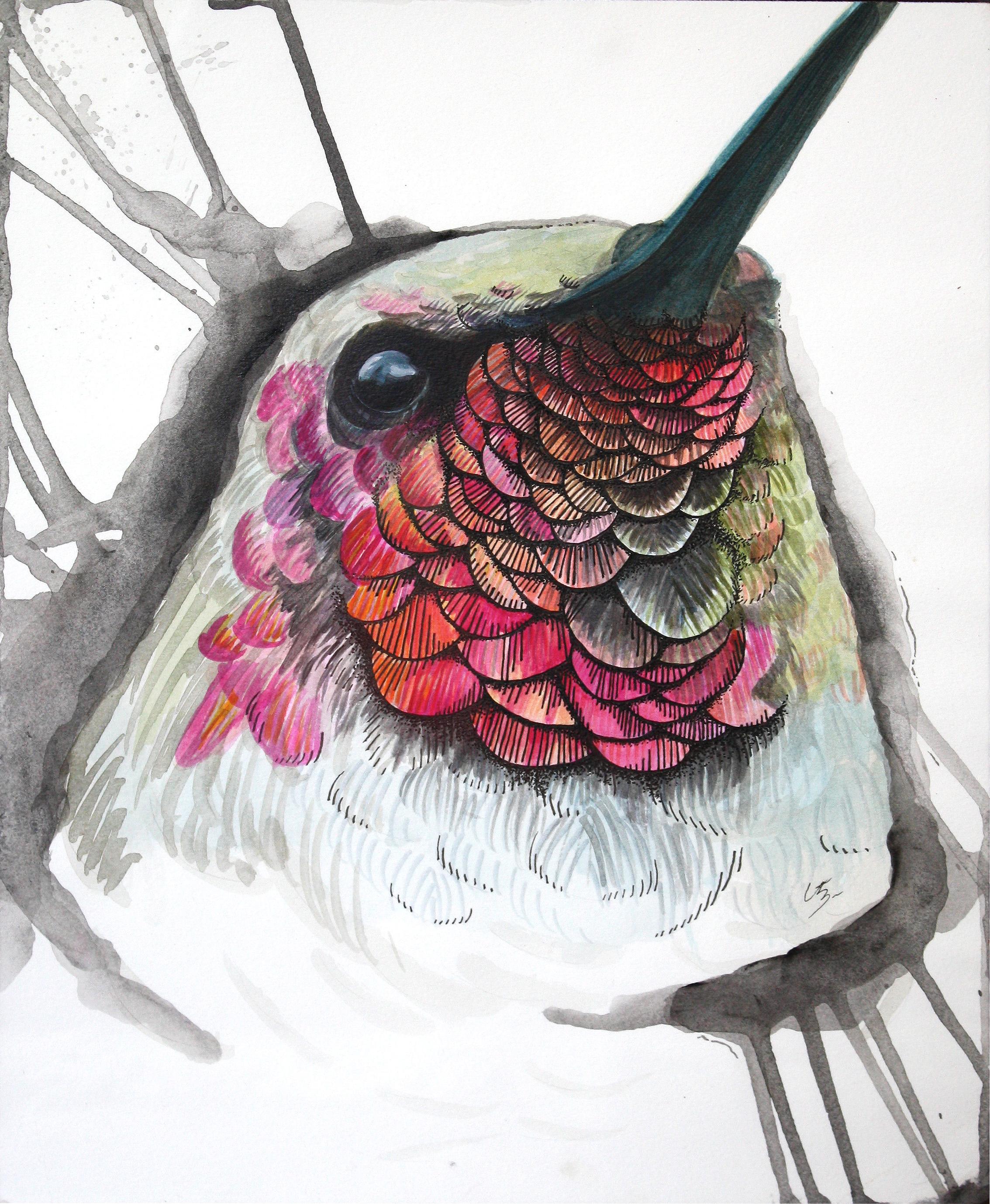 "Trochilidae   Pen & ink, acrylic on paper  9"" x 12"""