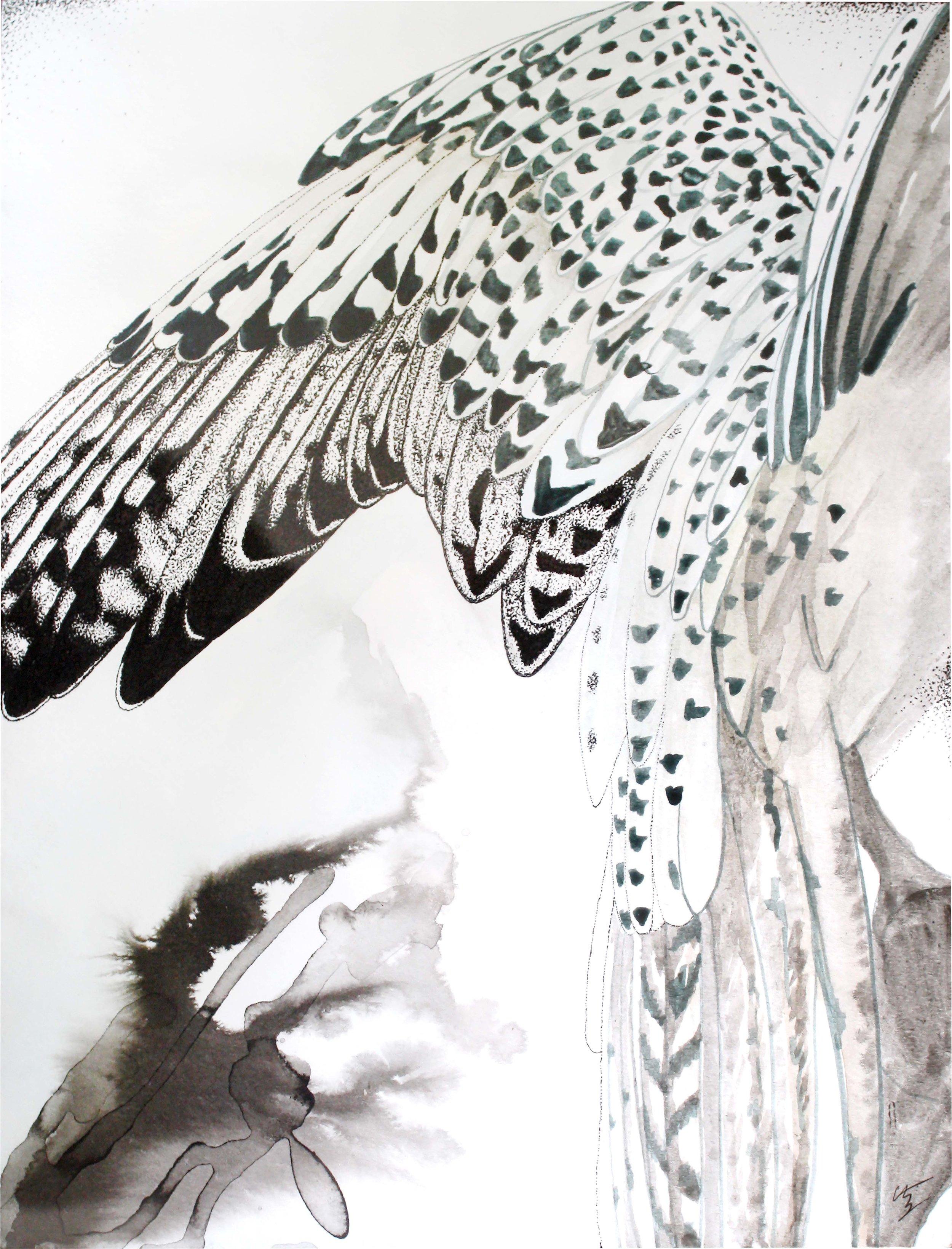 "Falco Rusticolus   Pen & ink, acrylic on paper  9"" x 12"""