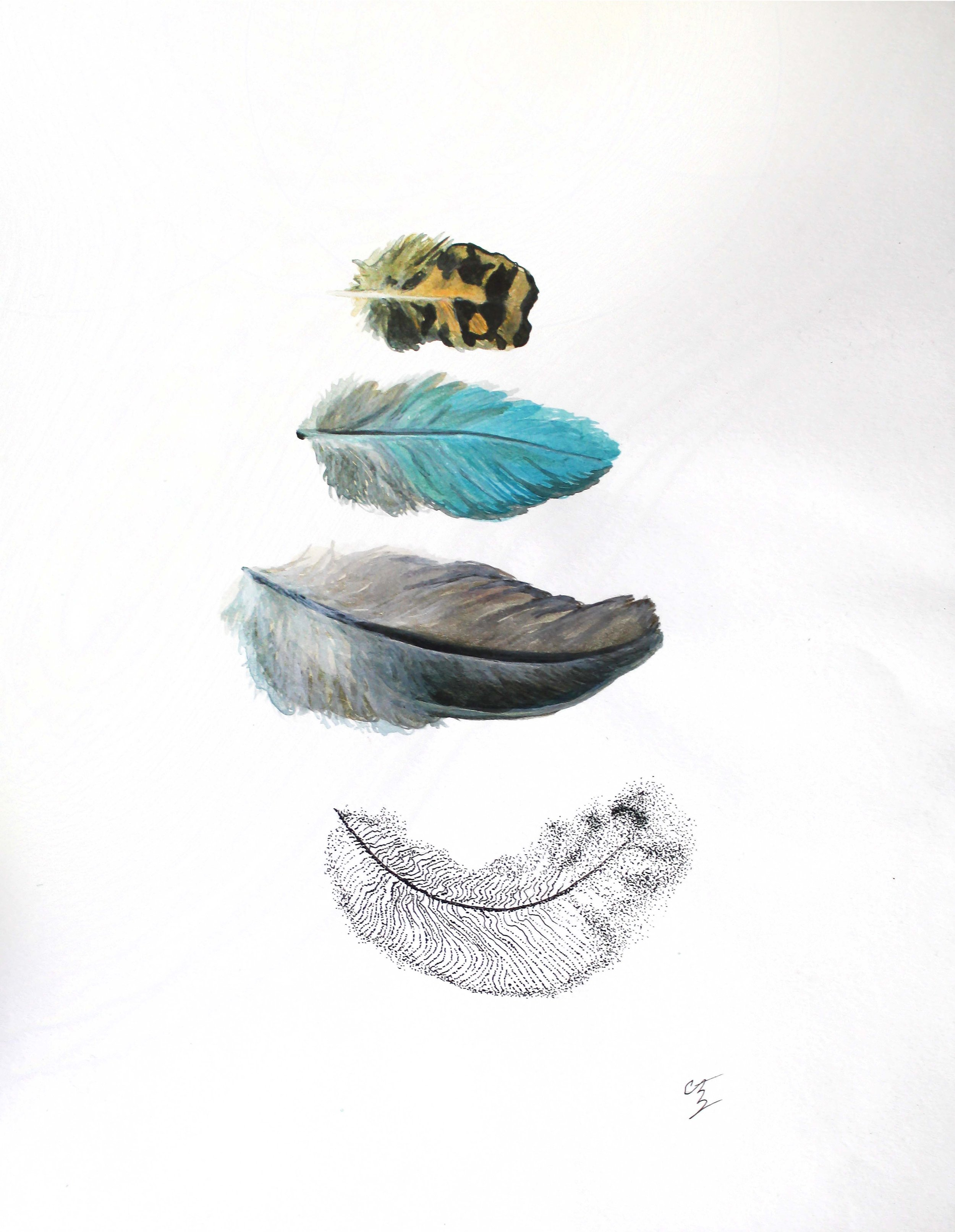 "Pluma: Variis   Pen & ink, acrylic on paper  9"" x 12"""