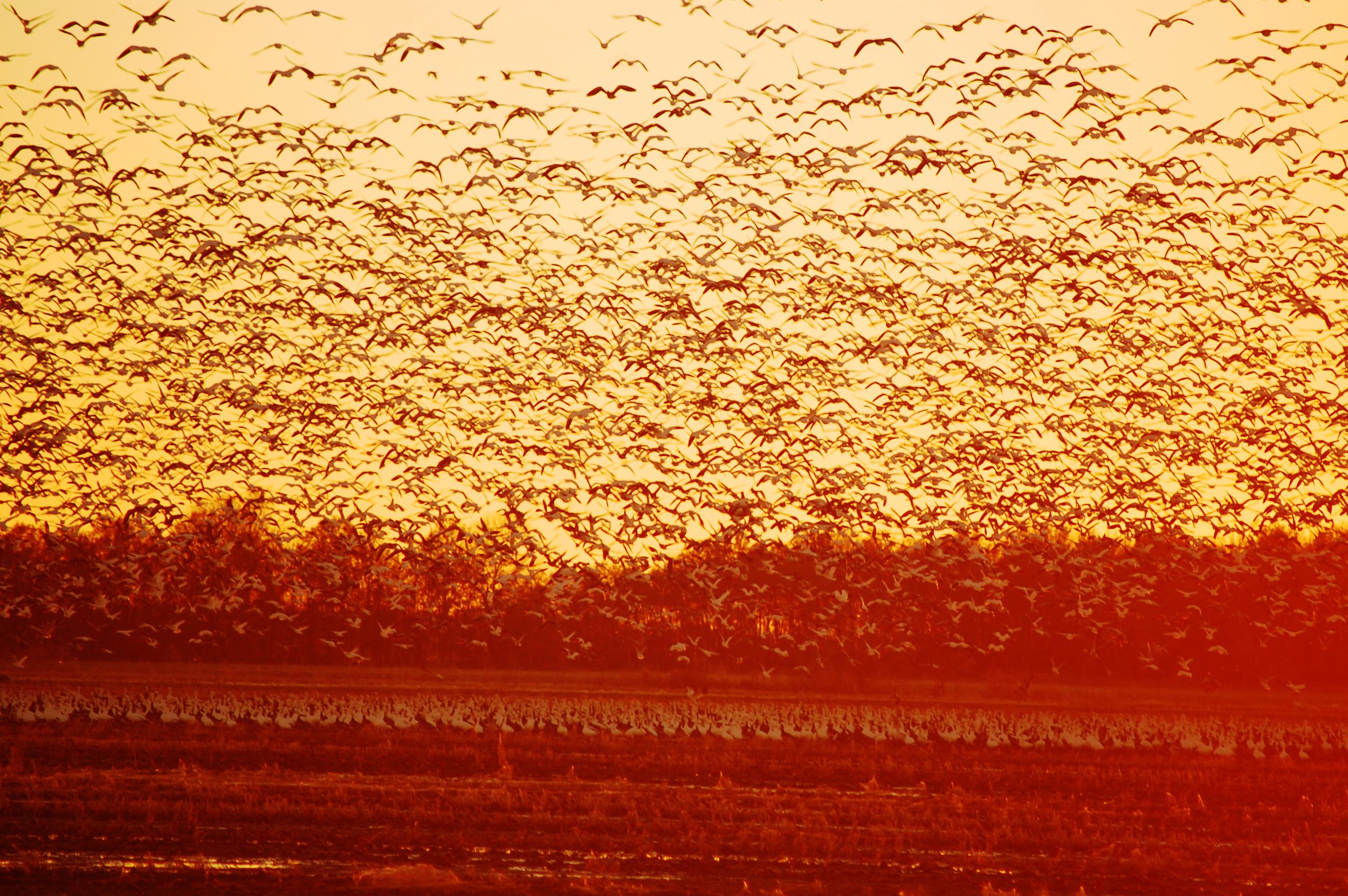 Migration on the Mississippi Delta