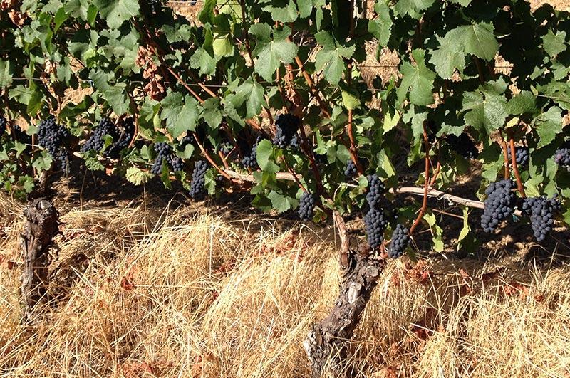 Twelve-Vineyard-5.jpg