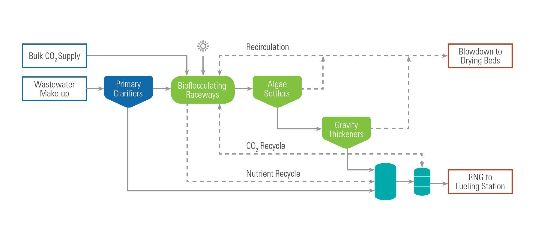 Algae process engineering