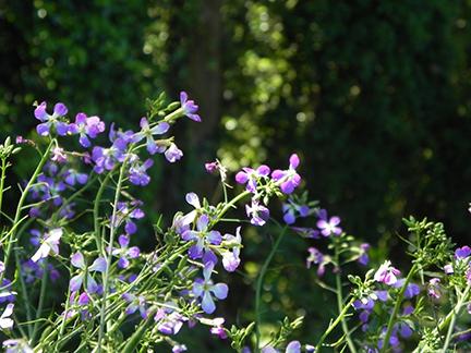 Cross Flora4.jpg