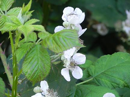 Cross Flora8.jpg