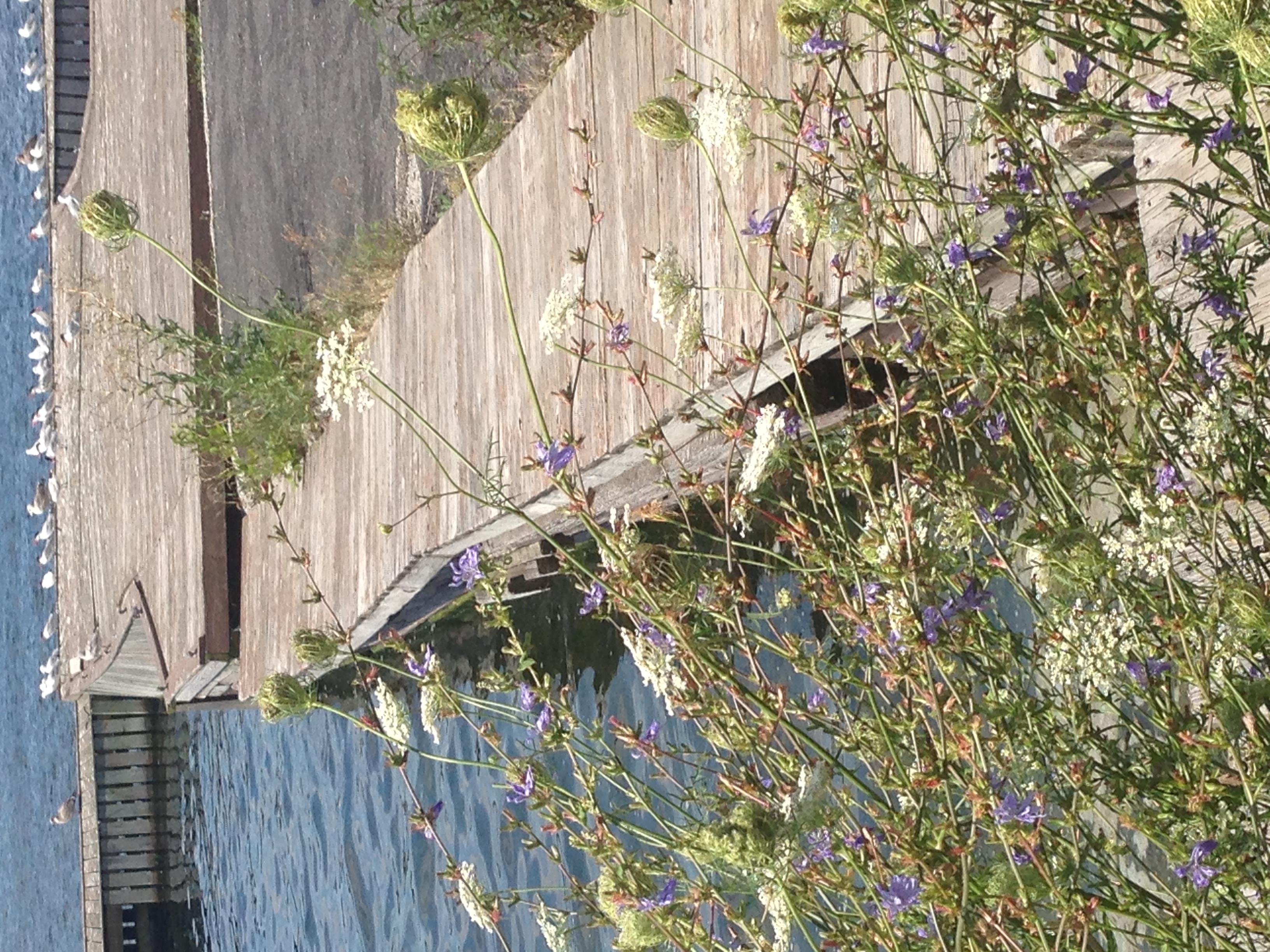 Dock photo.JPG
