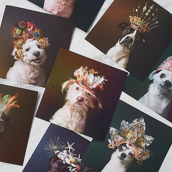 Free People Dogs