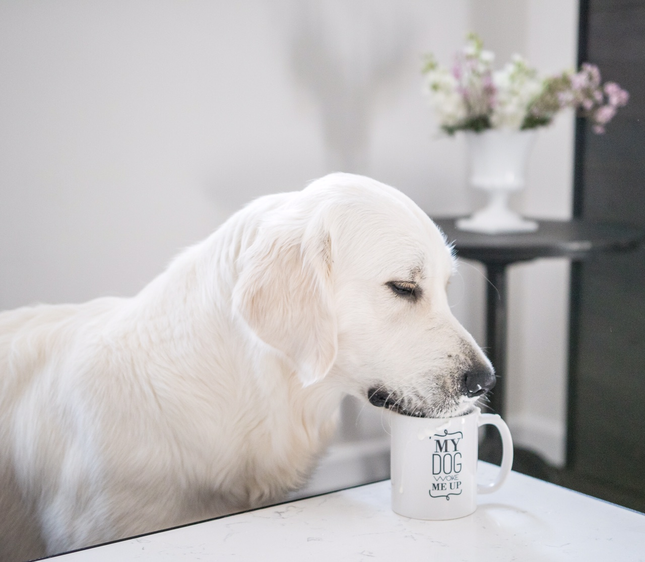 "Barkley & Wagz ""My Dog Woke Me Up"" Black & White Typography Mug"