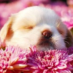 Sleeping puppy amongst flowers