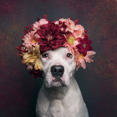 Sophie Gamand Flower Power Pitbull