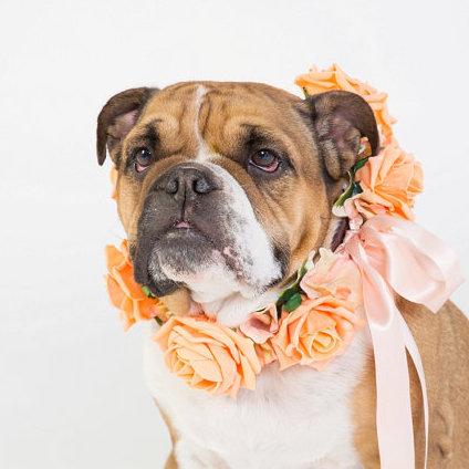 Peach Rose - Flower Dog Collar for Weddings - peach, apricot