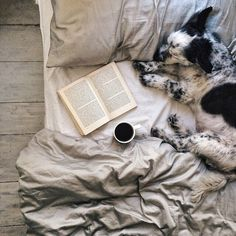 Spotted Dog Napping Next to Book & Coffee