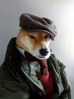 Shiba Inu Wearing Hat, Tie, Sweater, and Jacket