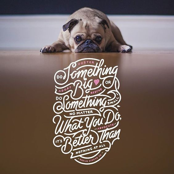 Pug With Adoption Typography