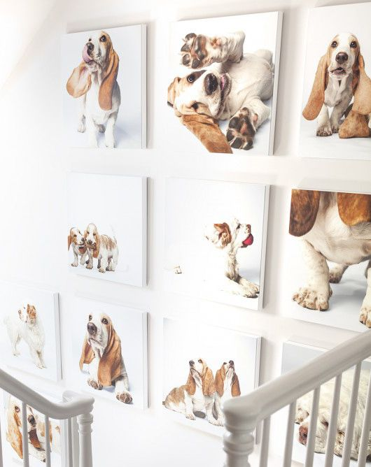 Photography - Decking the Halls with the Art of Amanda Jones - Photos of Basset Hound