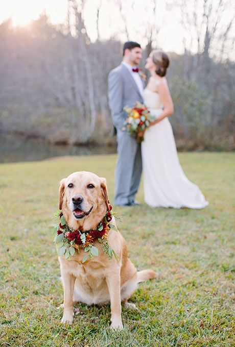 Ways to Include Pets in Your Wedding