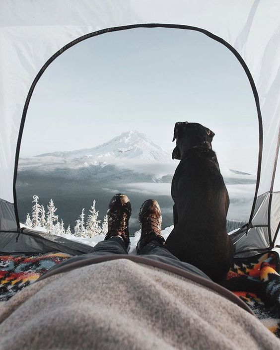 Black Lab Traveling to Mountains with Adventurous Human