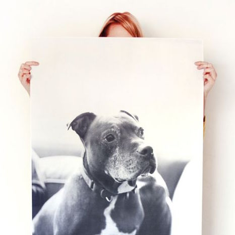 How to Make an Oversized Print of Your Dog for $5