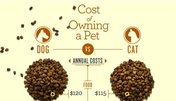 Cost of Owning a Pet Infographic