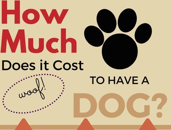 How Much Does it Cost to Have a Dog? Infographic