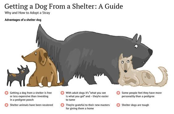 Getting a Dog From a Shelter: A Guide