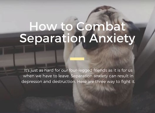 How to Combat Separation Anxiety in Dogs Infographic