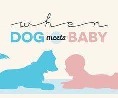 When Dog Meets Baby Infographic
