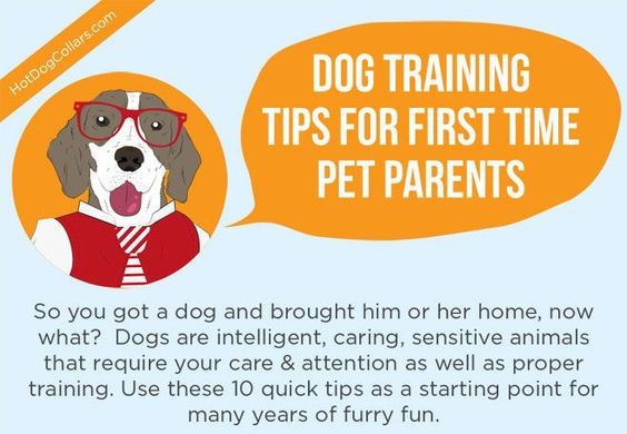 Dog Training Tips for First Time Pet Parents Infographic