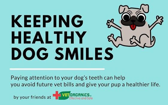 Keeping Healthy Dog Smiles Infographic