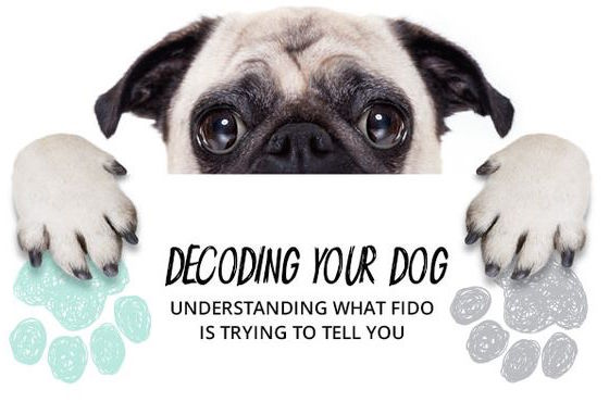 Decoding Your Dog Infographic