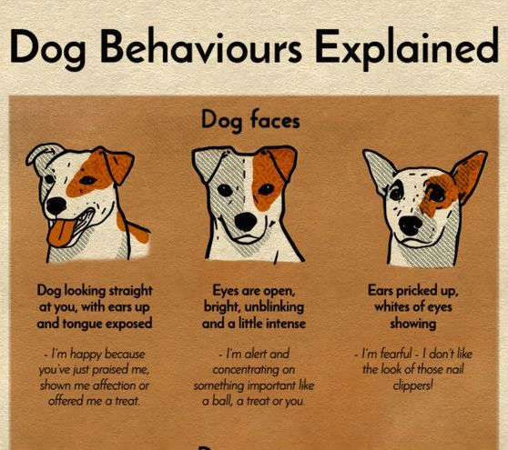 Dog Behaviours Explained