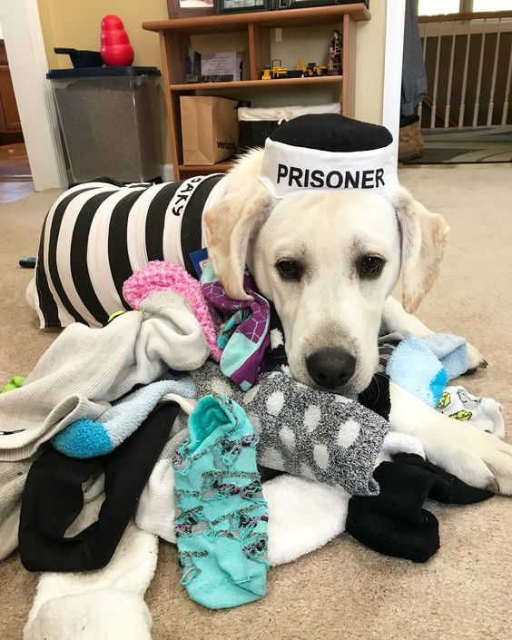 Sock Thief Dog Costume
