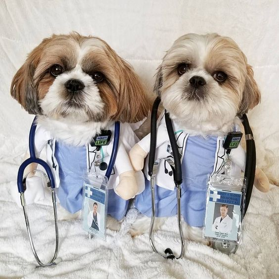 Doctor Dog Costumes